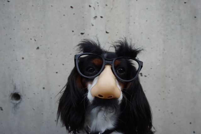 変装メガネをかけた犬
